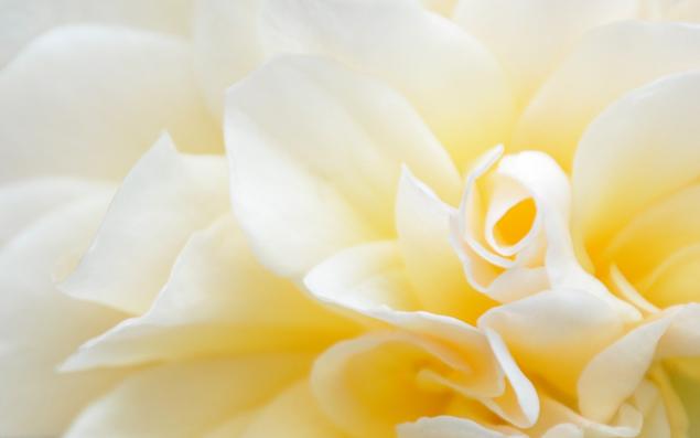free flower desktop wallpaper yellow preview