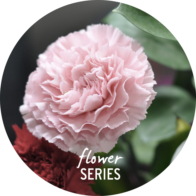 small carnation bouquet flower series