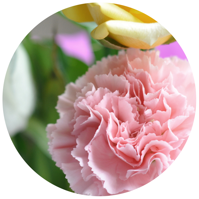 pink carnation bouquets flower series
